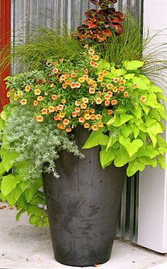 5 règles pour faire l'arrangement de vos jardinières vous -même!